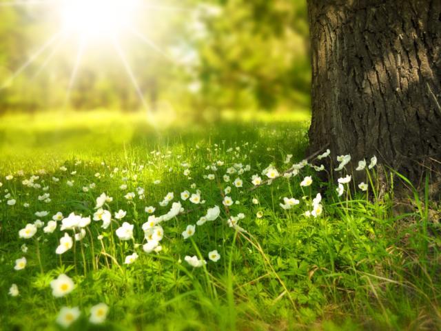 spring-pixabay-diffusion-interdite.jpg